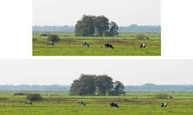 stretching a landscape while the cows stay in shape